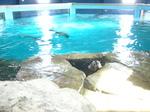 水族館 001.jpg