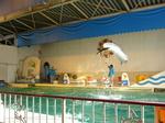 水族館 005.jpg